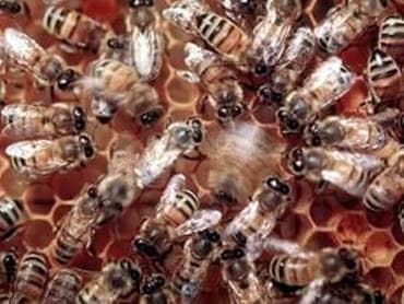 Producto de comida de miel