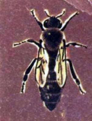Habilidades mentales de las abejas