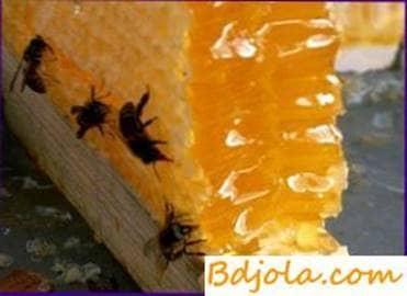 Uso de miel en medicina popular