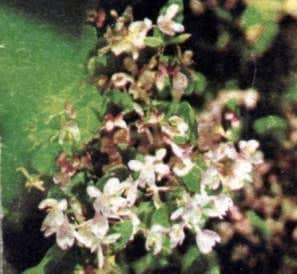 Sentido del olfato y el gusto en las abejas