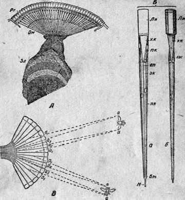 Estructura externa del cuerpo de la abeja