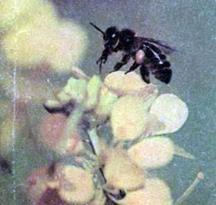 Memoria para el tiempo de las abejas