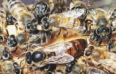 La vida de una familia de abejas