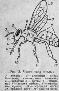 La familia de las abejas y su composición
