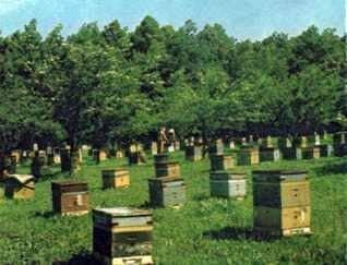 Métodos de orientación de las abejas