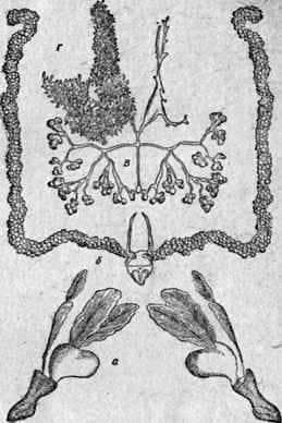 Estructura interna del cuerpo de la abeja
