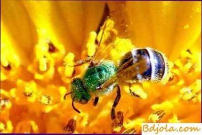 La composición del balance de forraje del apiario