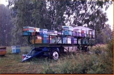 Organización de un apiario nómada