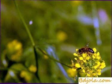 Transporte de abejas
