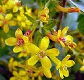 Colección de miel y polen en huertos (huertos)
