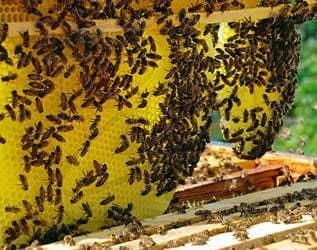 Otoño acumulación de abejas en el pabellón