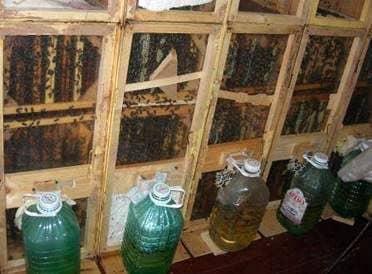 Equipo de pabellón para abejas