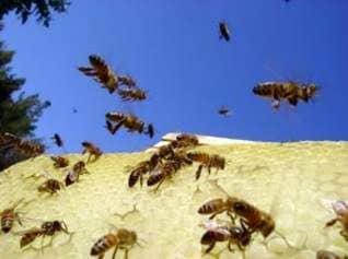Vuelo artificial de sobrevuelos de abejas