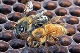 Hibernación de las abejas en el pabellón
