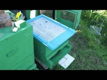 Ventilación de las colmenas del pabellón