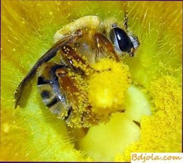 El contenido de vitaminas en la miel