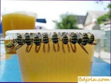 Cómo identificar la miel falsa