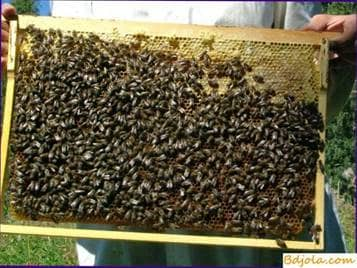 Determinación del contenido de almohadillas de miel