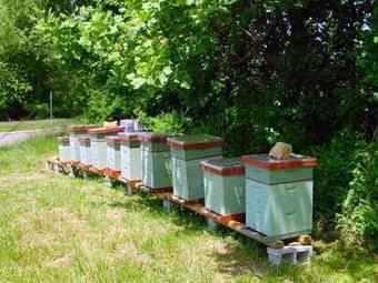 Cuidado de las abejas por teléfono
