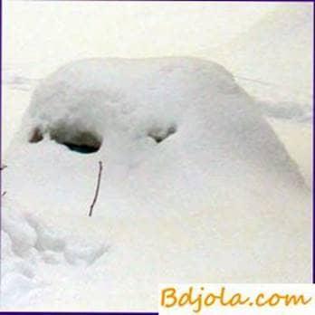 Hibernate bajo la nieve