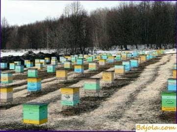 La invernada exitosa de las abejas