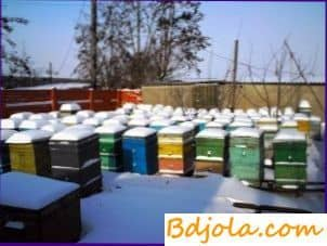 Cuando las abejas invierno mejor