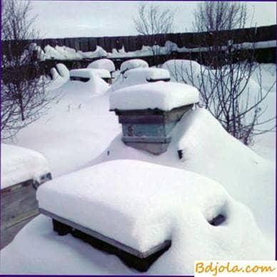 Invernada en el testamento en las cabañas en las tumbonas de dos en dos