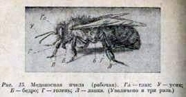 La alimentación de una familia de abejas