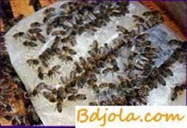 Alimentación de abejas con sustancias proteicas