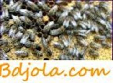 Reproducción de abejas