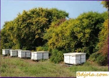 Protección de las abejas contra el envenenamiento