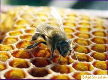 Alimentando a las abejas