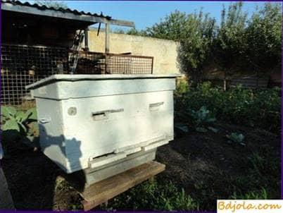 Colmena de control en el apiario