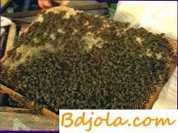 Cuidado de las abejas en invernaderos
