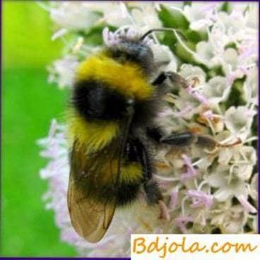 La durabilidad de la vida de las abejas en los invernaderos