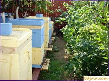 Selección de un lugar para un apiario y alojamiento de colmenas