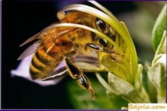 Alimentación recogida por las abejas