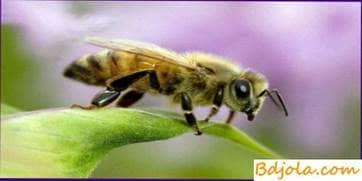 Robo y ataque de abejas