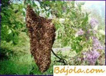 Formación artificial de nuevas colonias de abejas