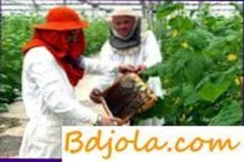 Conservación de abejas en invernaderos