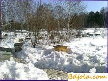Exposición de abejas en la primavera desde la cabaña de invierno