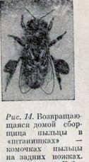 Питание пчелиной семьи