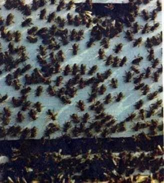 Небесный компас ориентировки пчел
