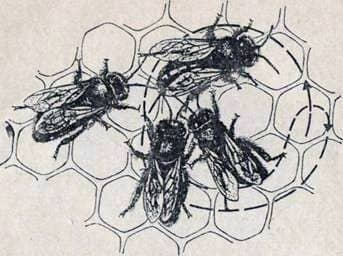 Как пчелы разговаривают друг с другом