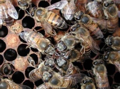 Уход за пчелами в зимовниках