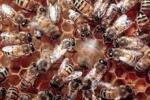 Honey food product