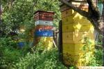 Preparación de existencias de las abejas