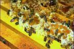 О тепличных культурах и пчелах