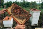 Как обращаться с пчелами при работе