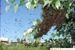 Prohibición del enjambre de abejas